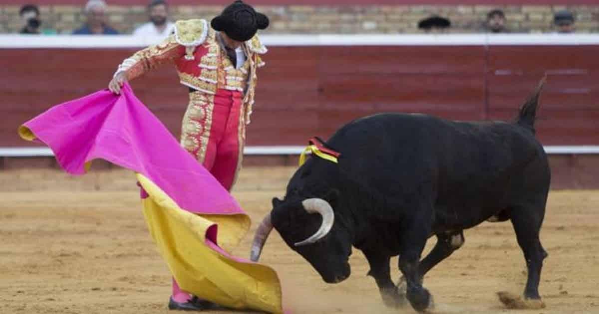 paginas ver toros directo gratis